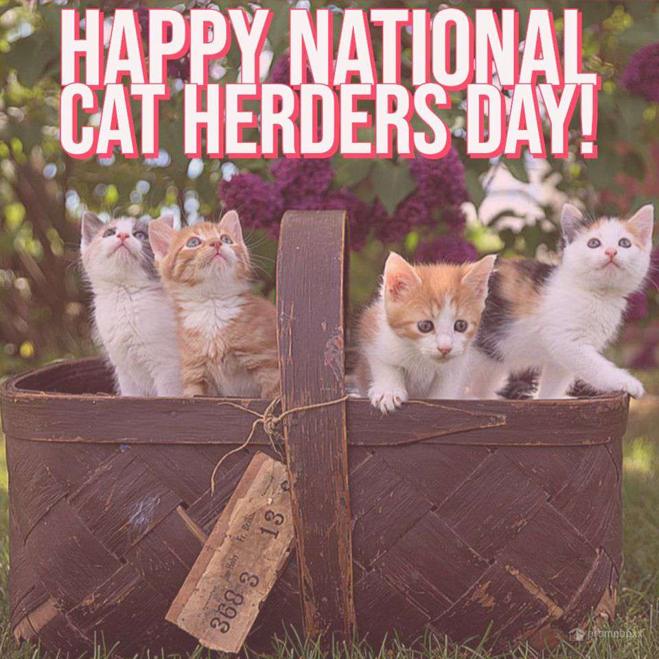 National Cat Herders Day Wishes for Instagram