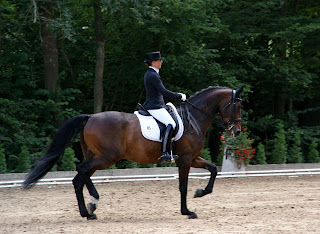 Bay Dressage Horse Being Ridden In a Competition School