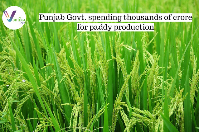 Punjab paddy production
