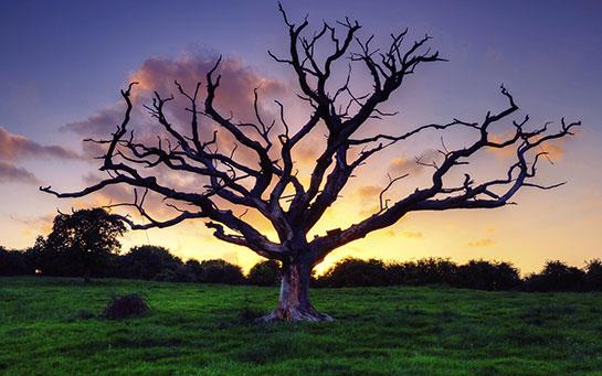 Ben bir ağacım
