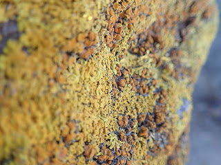 yellow and orange lichen on a rock