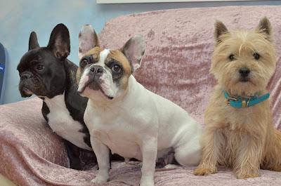 Pension familiale chien