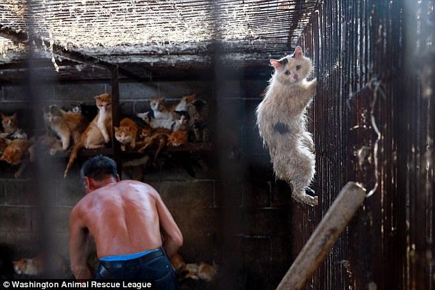 Slika očajne mačke u klaonici taknula je cijeli svijet.