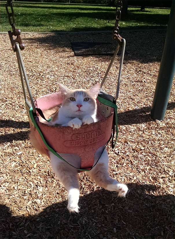 8. Not Only Was He Swinging, He Was On A Leash. The Most Patient Cat Ever
