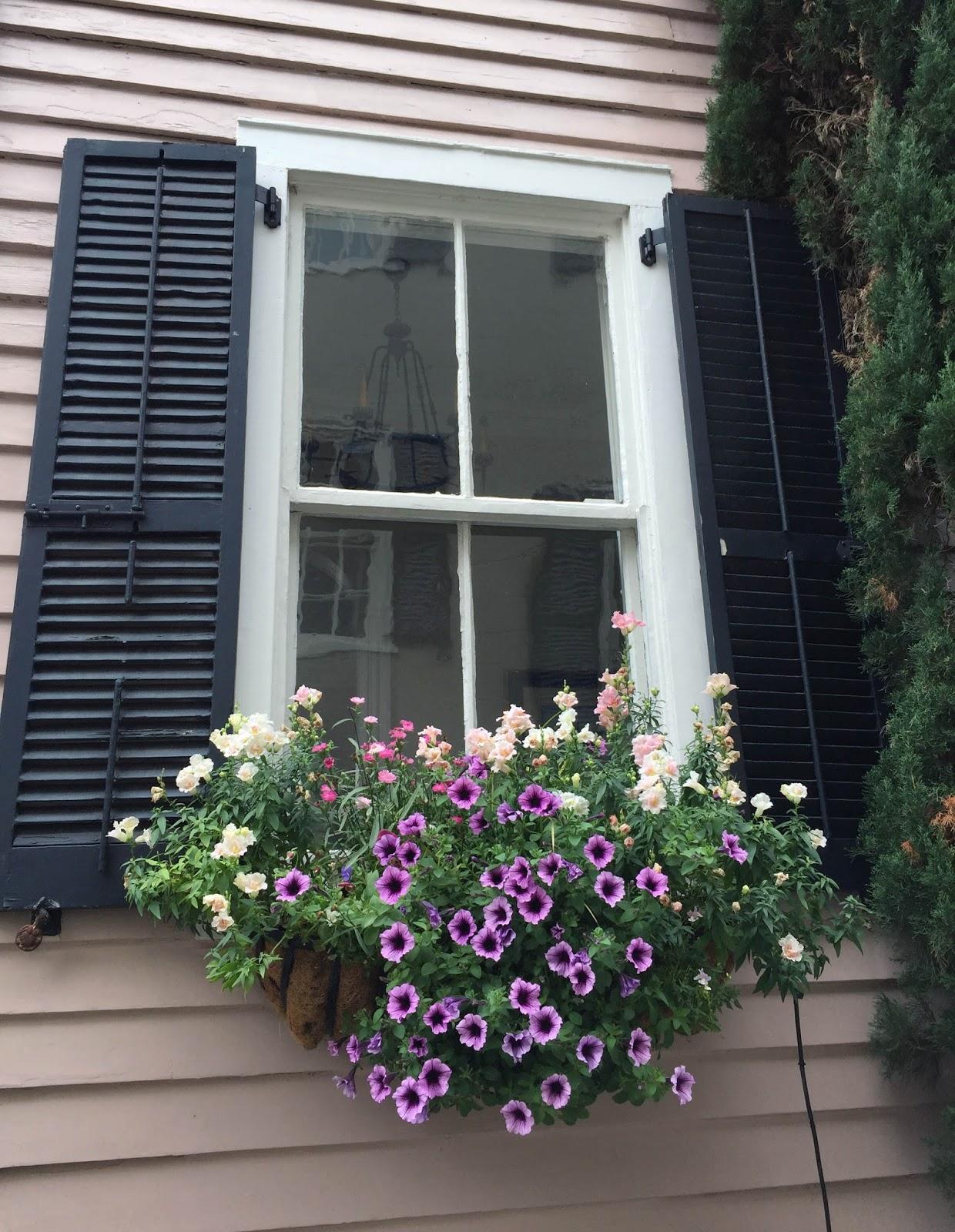 JaneVille Window Boxes in Charleston South Carolina