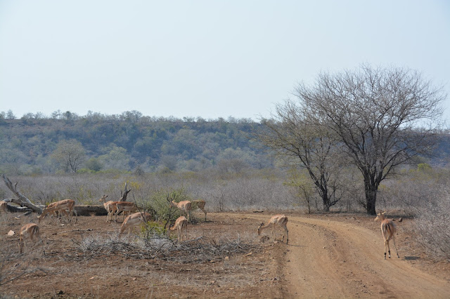 Singita Sweni Africa hotel resort Kruger National Park deer