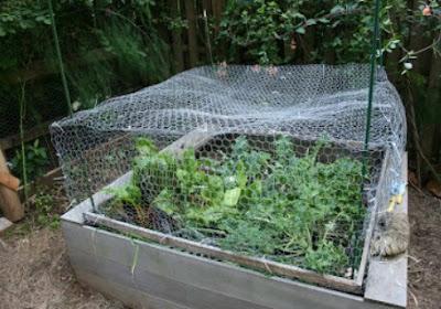 Preparing Your Garden For the Winter