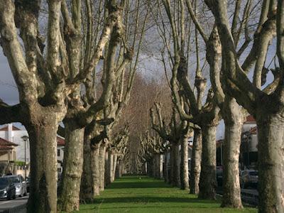árvores sem folhas, típicas de Inverno
