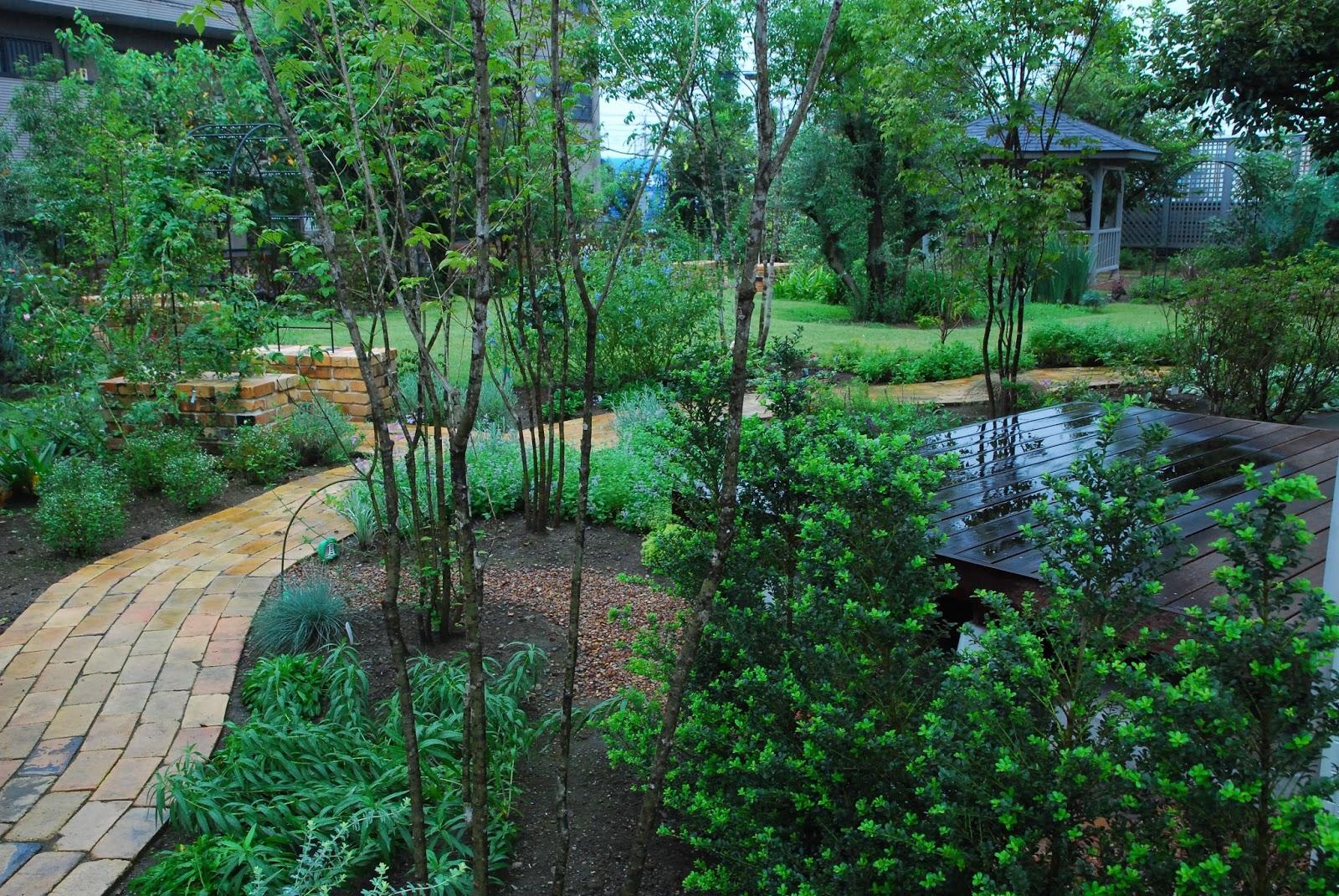 スーさんのガーデンブログ: 雨の中の庭