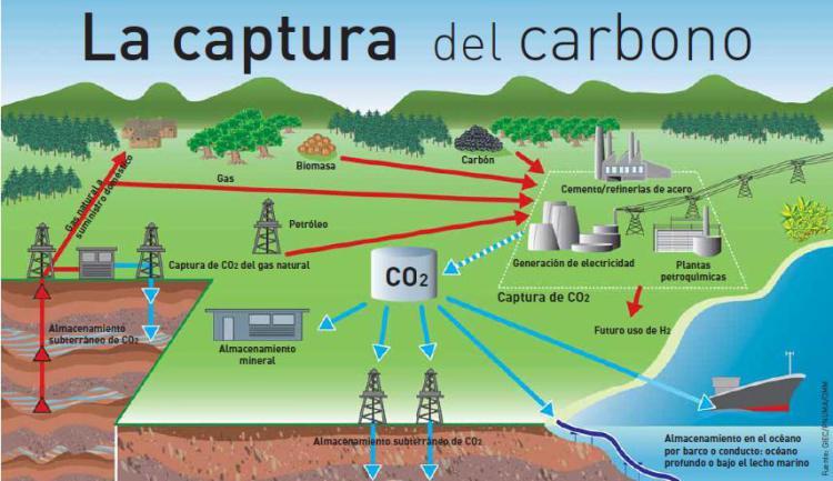 Bosques disponibles para captura y almacenamiento de CO2