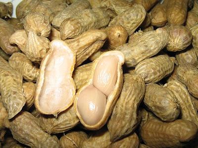 """panduan-budidaya-kacang-tanah-dengan-pupuk-organik-nasa-natural-nusantara-distributor-produk-nasa"""