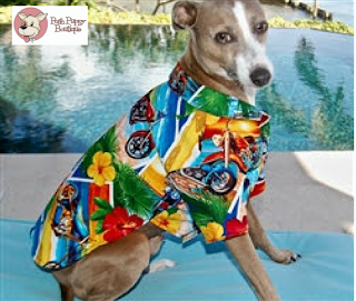 POSTCARD PRINT HAWAIIAN DOG SHIRT