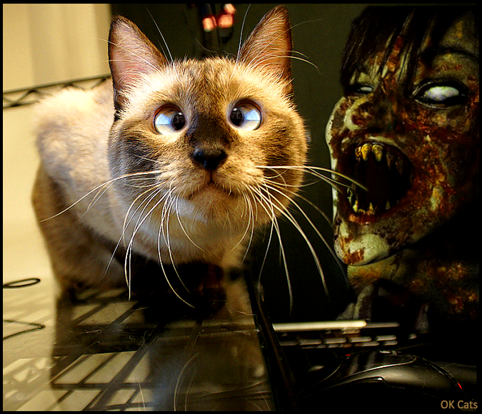 Photoshopped Cat picture • OMG kitty a ferocious Zombie is going to catch you! [cat-gifs.com]