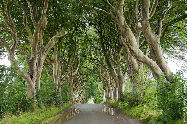 Irlanda del Norte Dark Hedges