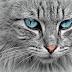 Hasil Foto Ini Tunjukkan Warna Bola Mata Kucing yang Tak Biasa