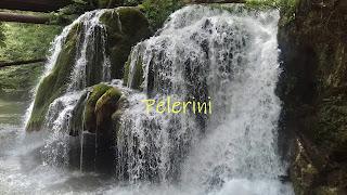 Pelerini