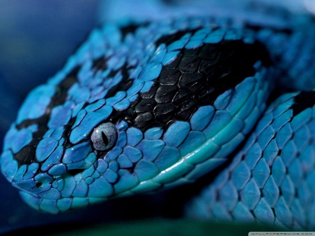 snake - photo #8