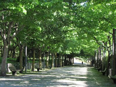 alameda no Parque do Covelo