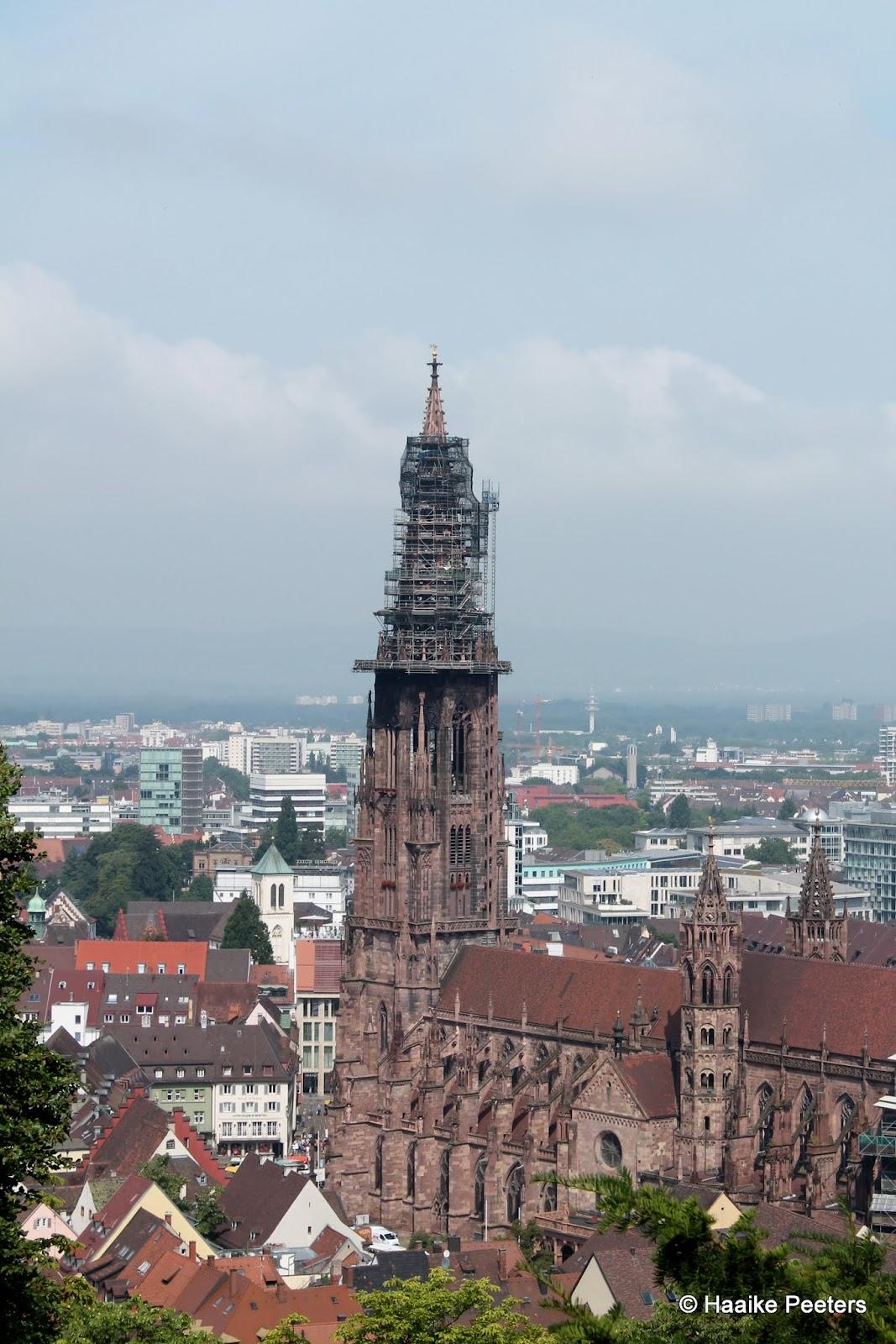 Freiburg (Le petit requin)