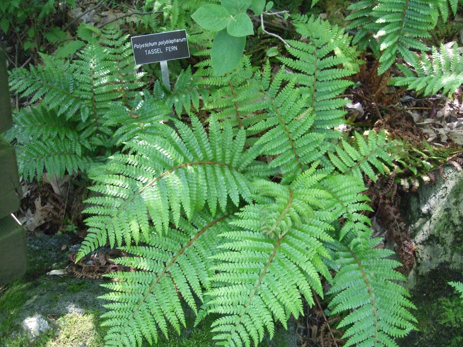 The Great Hunt: Example of a Vascular Seedless Plant: Zoo ...