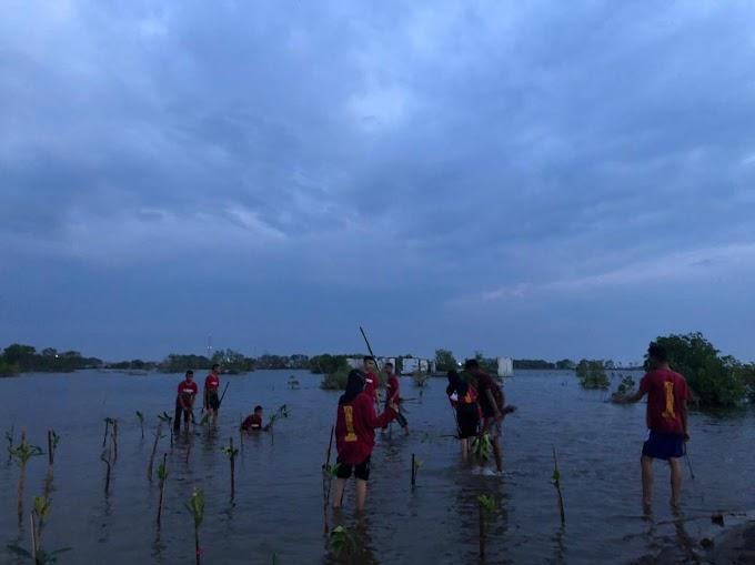 Lestarikan Pantai Pekalongan, PASSUSBRA SMANSA Tanam Mangrove
