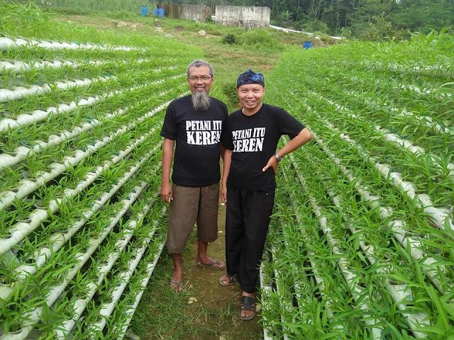 Tips dari Charlie ,Raup Puluhan juta rupiah setiap bulan  dari Kangkung Hidrophonik