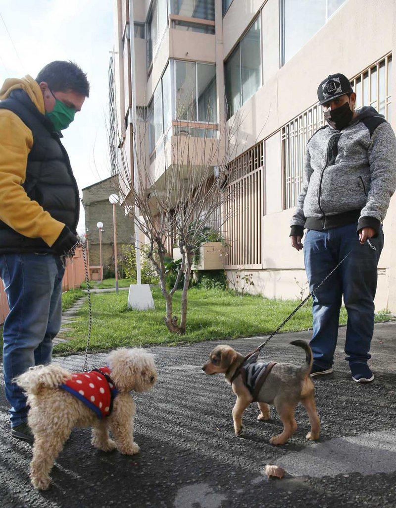 fin a la prohibición de mascotas en condominios