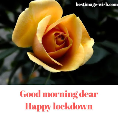good morning wish with rose