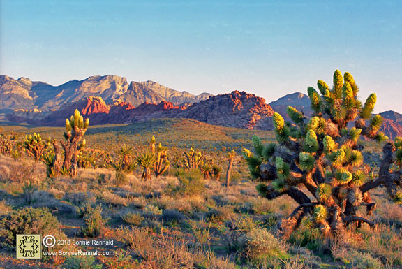 Spring Morning at Red Rock Canyon National Conservation Area