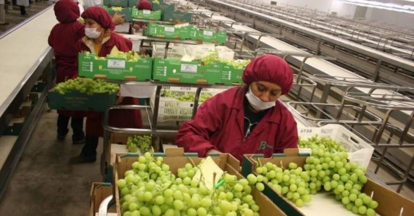 Perú es el segundo exportador mundial de uva