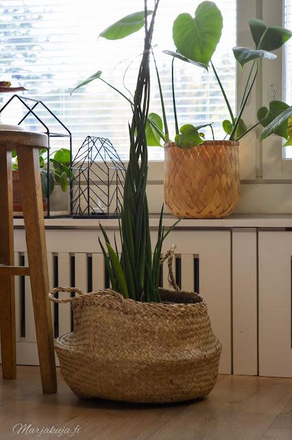 olohuone vaalea sisustus olohuoneen sisustus huonekasvi anopinkeihäs viherkasvit