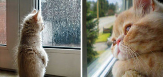 10+ Cats Desperately Waiting For Their Humans To Return