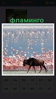 655 слов большое количество фламинго и рядом прогуливается буйвол 7 уровень