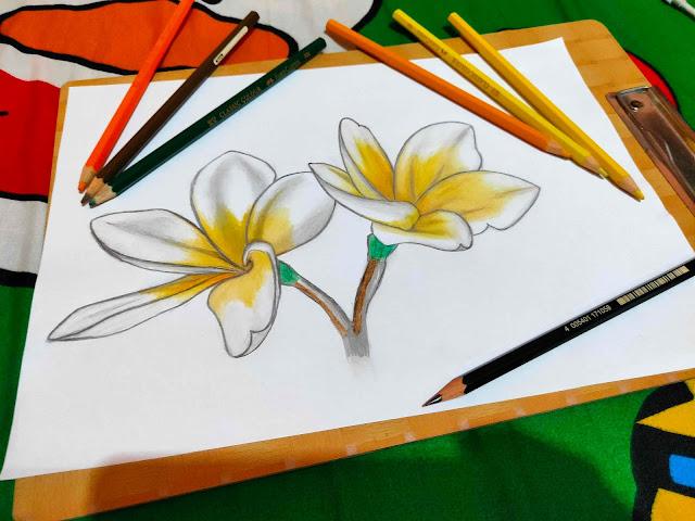 langkah-langkah menggambar bunga kamboja yang paling awal adalah