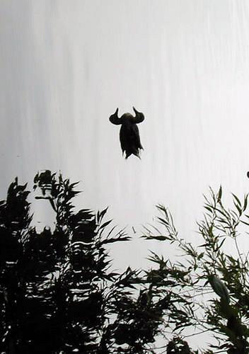 Bir gölde yüzen ördek resminin dikey çevrilmesiyle oluşan ve bir bufalo kellesi resmi gösteren simetrik göz yanılması