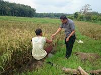 Wakil DPRD Lamtim Lakukan Peninjaun Lokasi Pendangkalan Sungai Bandaragung-Curug