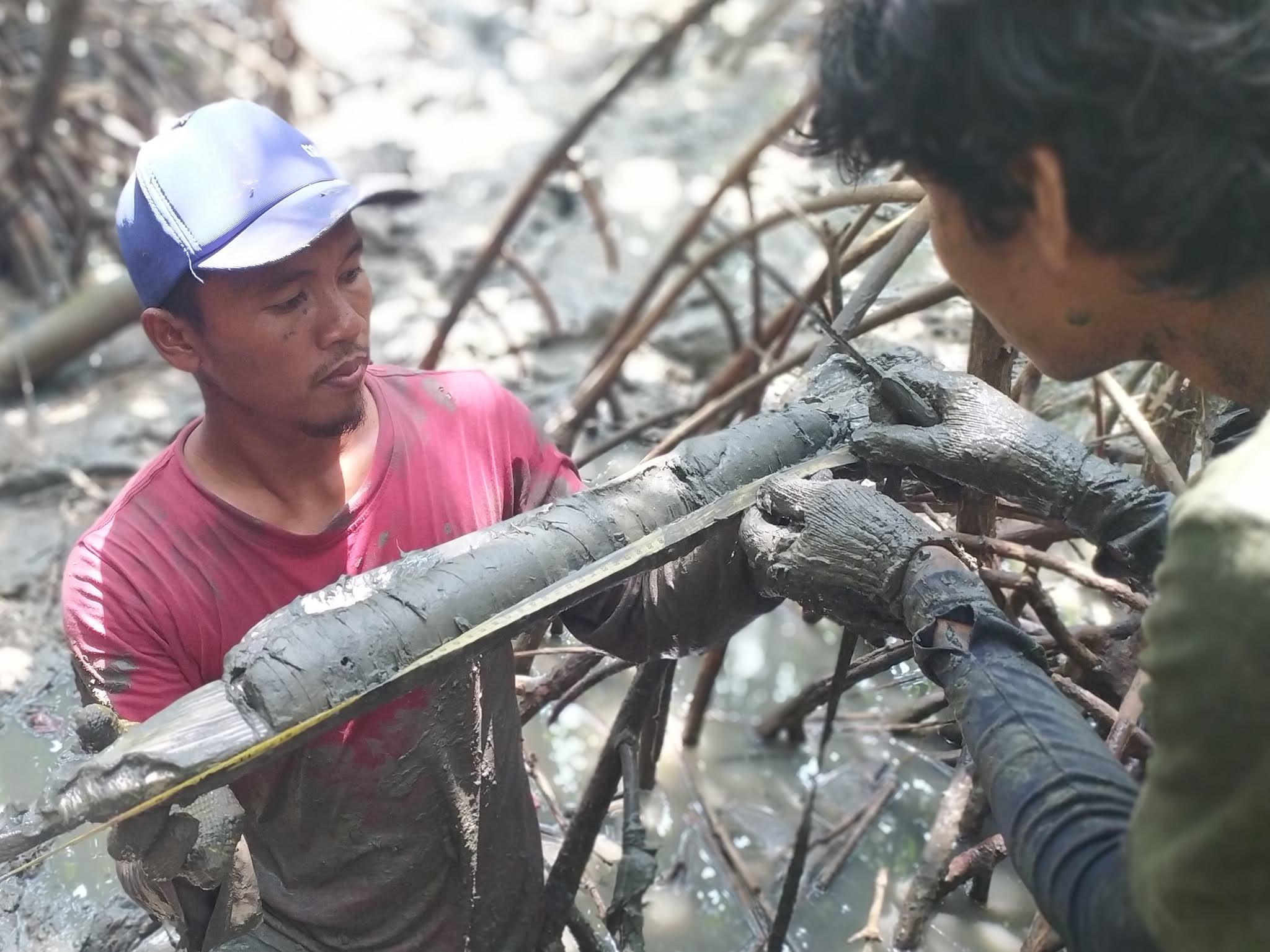IKAMaT Kerjakan Proyek Riset Karbon Mangrove di Brebes