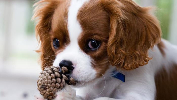 Sognare cani di diverse razze i significati più bizzarri del cane nel  sogno!
