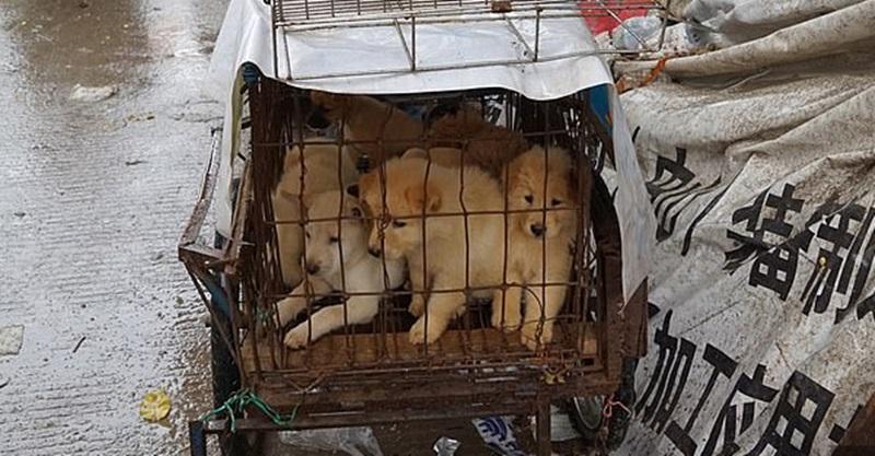 Cidade chinesa estuda proibir pela 1ª vez no país que cachorros sejam comidos