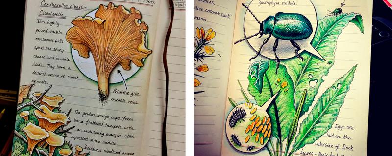 Diario de naturaleza ilustrado