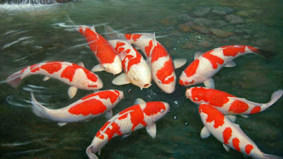 8 Alasan Dan Cara Mengatasi Ikan Koi Melompat Dari Kolam