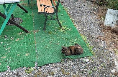 裏庭にいる猫