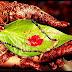 भारतीय विवाह संस्कार की वैज्ञानिकता
