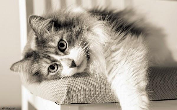 Une jolie Photo chat gratuit