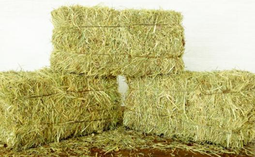 pembuatan rumput dijadikan hay