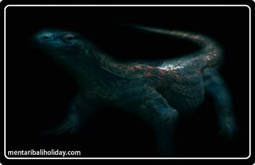 46 Koleksi Gambar Hewan Komodo Beserta Penjelasannya HD