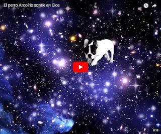 video el perro arcoiris sonrie en CICE de Pablo