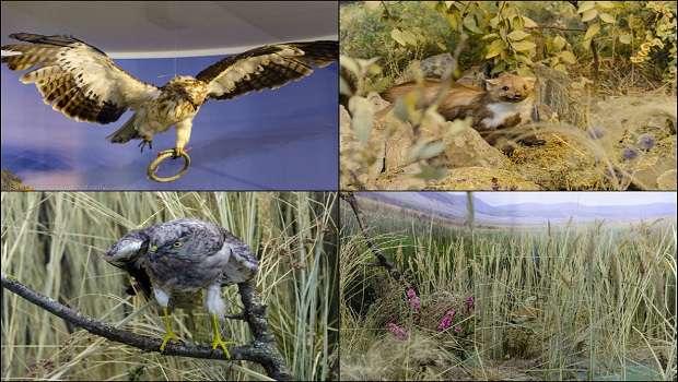 Vietăți și animale in Parcul Național Munții Măcinului