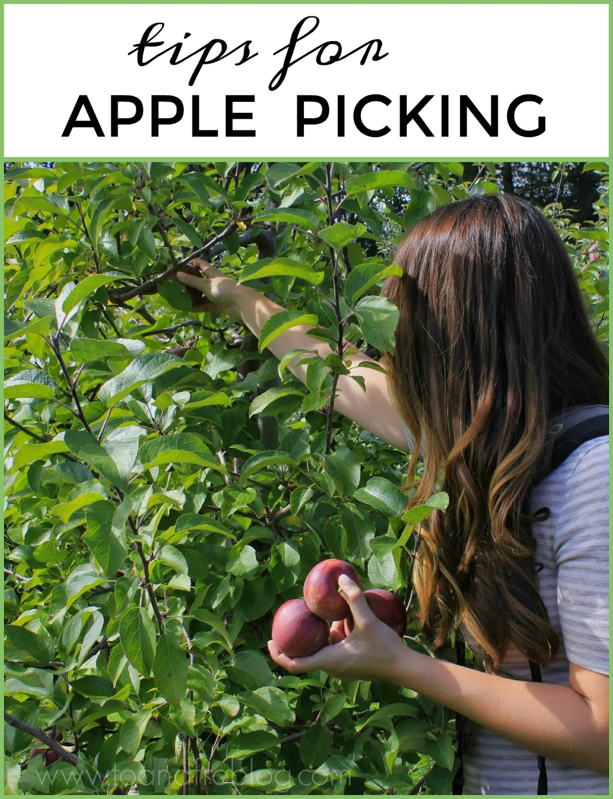 Tips for Apple Picking with Your Family
