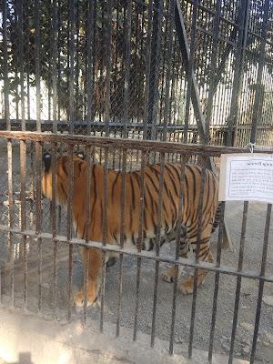 चक्कर बाग झु, junaghad zoo